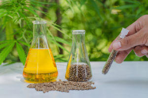 CBD Oil For Ferrets
